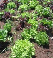A healthy soil grows healthy plants!