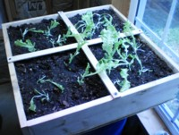 building a square foot garden, my 2 x 2 box square foot gardening