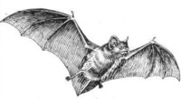Bat guano is collected from the floor of caves where bats live.