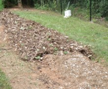 In the foreground you can see the eggshells on my raised bed.  Behind it I have already spread shredded leaves and pine needles.