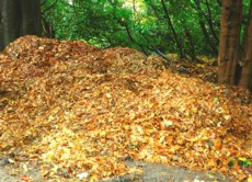 homemade organic fertilizer, raking leaves, leaf pile