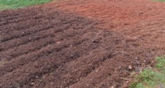 brix level, good soil