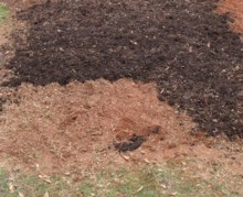 homemade organic fertilizer, spreading compost on a garden