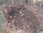 My compost pile, where I add some manure tea as a nitrogen source.