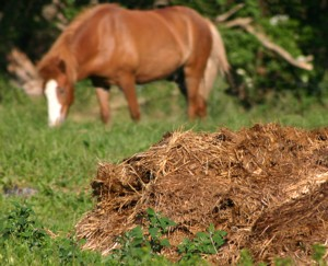 homemade organic fertilizer, horse manure