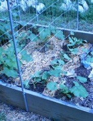 square foot gardening tips, constructing a trellis, building a trellis