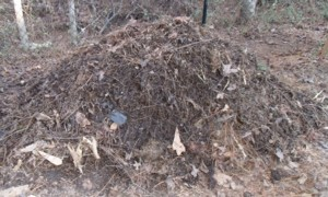 building a square foot garden, my compost pile